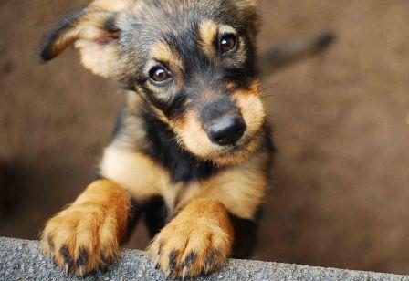 Хочу завести щенка.